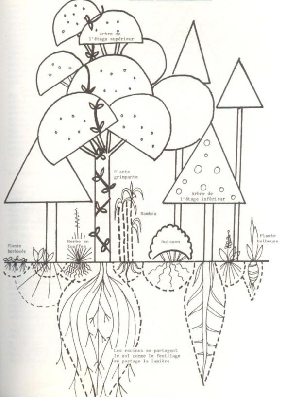Types de plantes en association