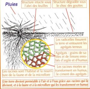 L'action des engrais vert, schéma de Dominique Soltner