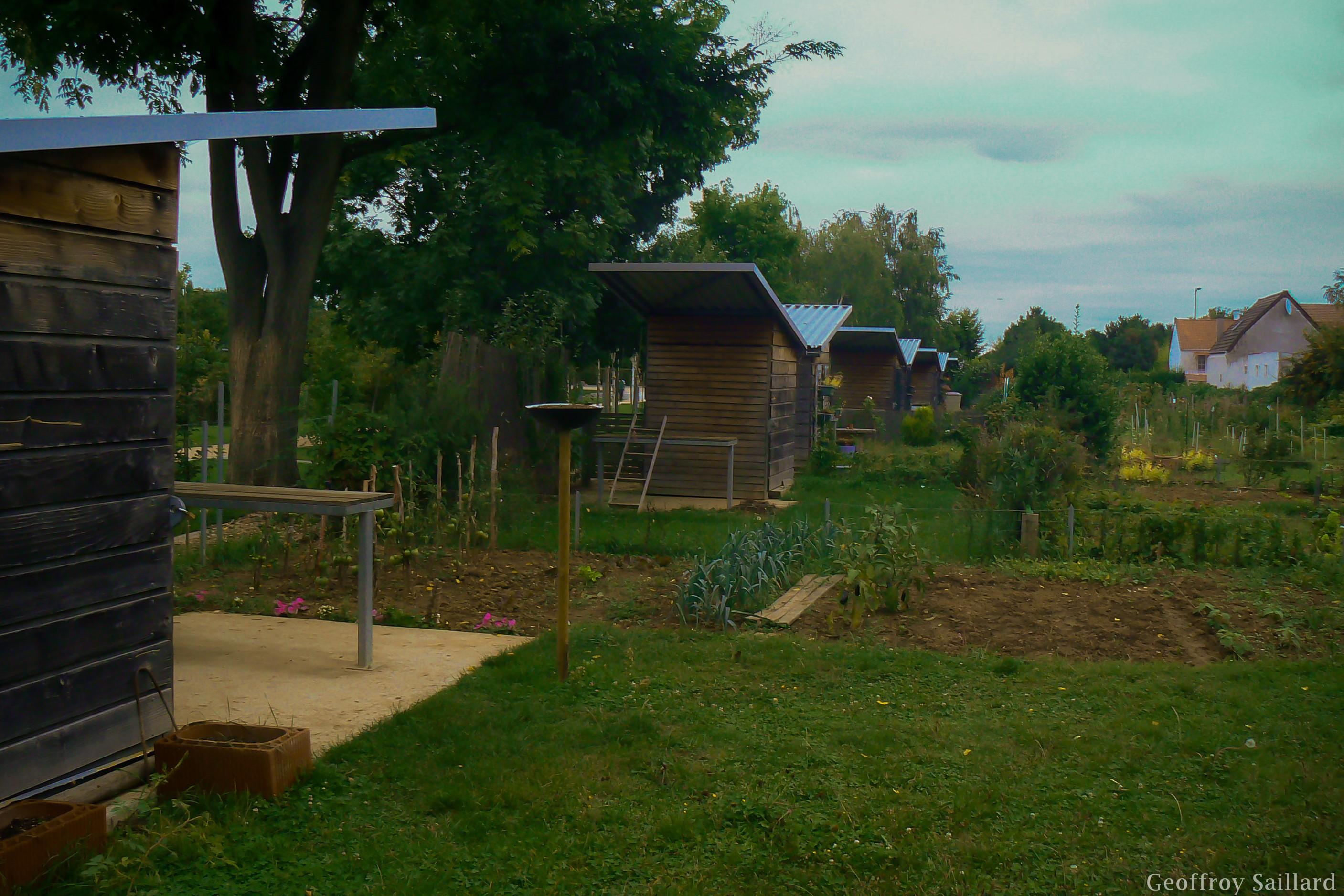 Jardin familial à Vitry-sur-Seine : parc des Lilas