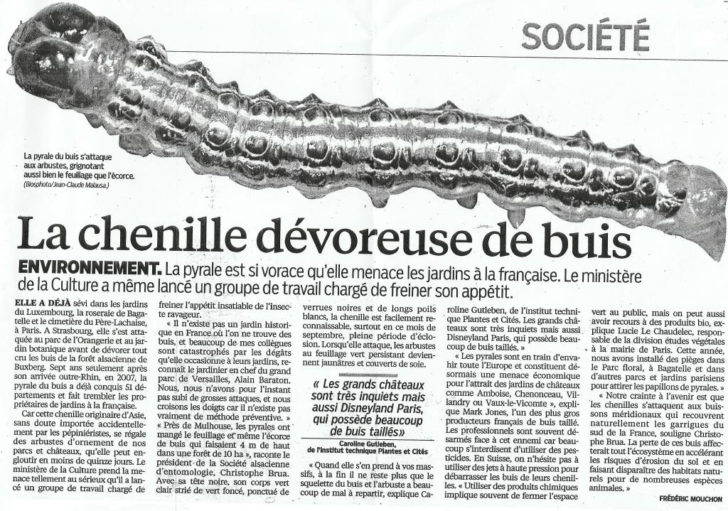 Pyrale-de-buis_presse