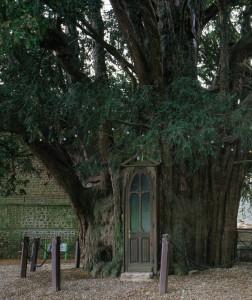 """La chapelle construite dans un tronc d'If à """"La Haye-de-Routot"""""""